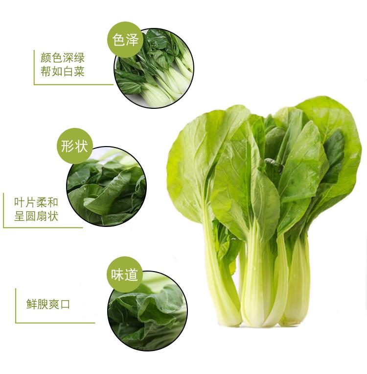 油菜_06.jpg