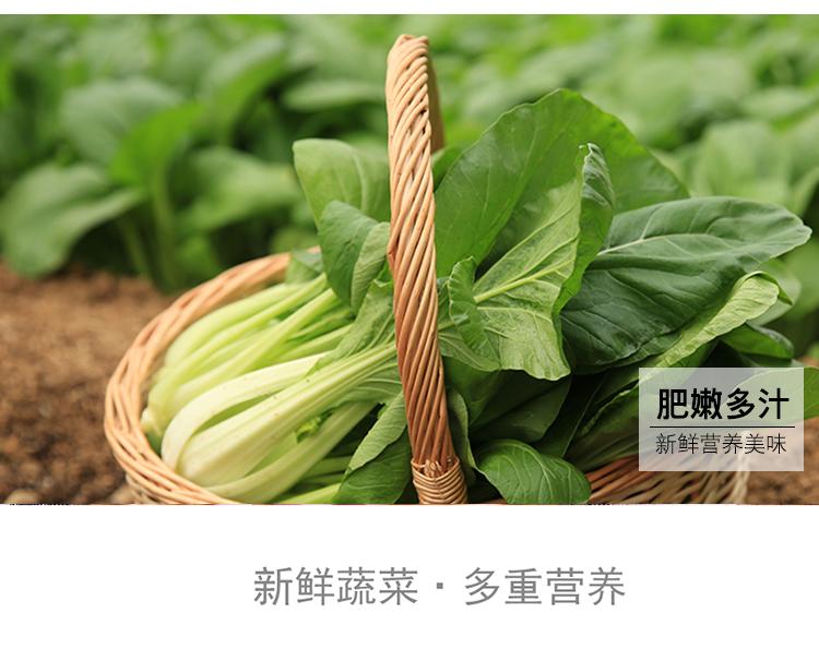 油菜_05.jpg