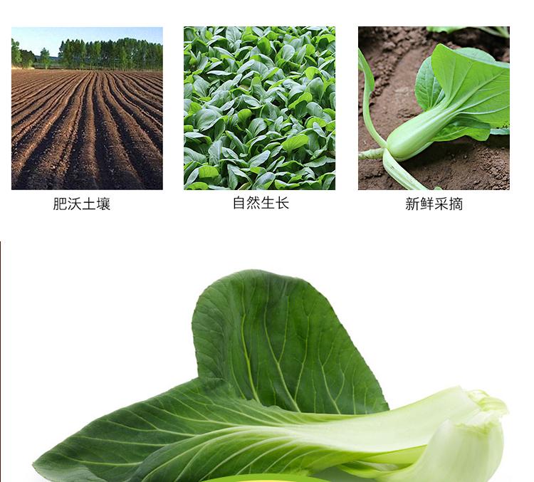 油菜_07.jpg