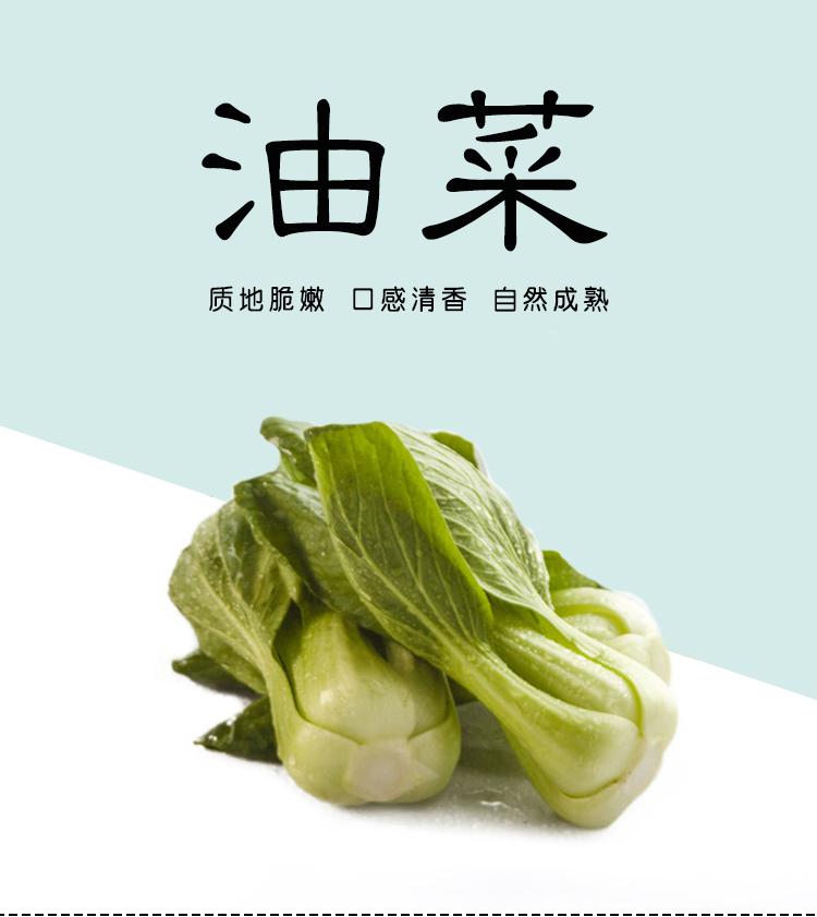 油菜_01.jpg