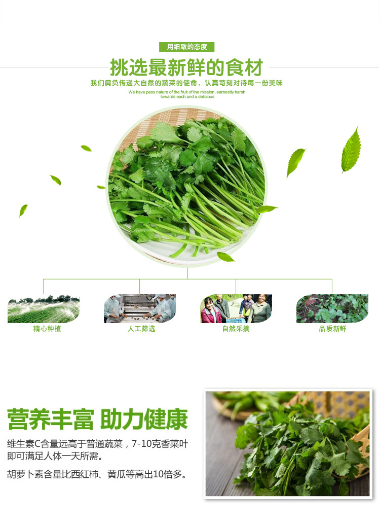 香菜_03.jpg