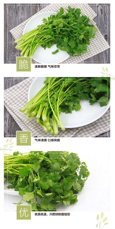 香菜_02.jpg